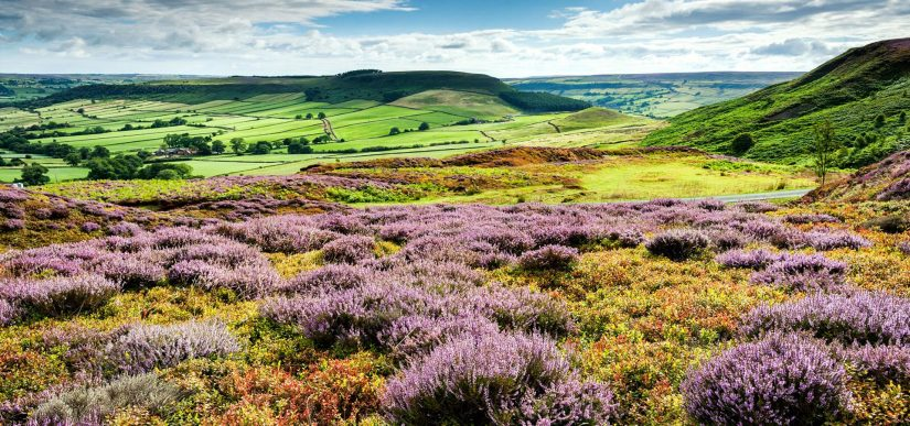 What's so special about North Yorks?